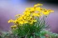 Картинка поле, природа, растение, лепестки, сад, луг