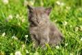 Картинка котенок, grass, травка, цветочки, kitten, flowers