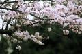 Картинка дерево, весна, цветет