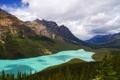 Картинка лес, Canada, озеро, Alberta, деревья, панорама, горы