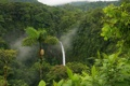 Картинка зелень, джунгли, Пальмы