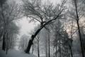 Картинка зима, серое, снег, дерево