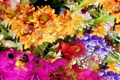 Картинка линии, цветы, природа, рендеринг, краски, лепестки, сад