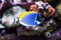 Картинка аквариум, рыбка, подводный мир, под водой, пестрая