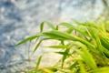 Картинка трава, листья, макро, природа, обои, растения, фотографии