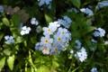 Картинка листья, макро, цветы, фото
