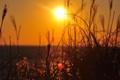 Картинка трава, солнце, лучи, пейзаж, закат, природа, растение
