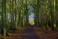 Картинка лес, пейзаж, природа, тропа, path, woodland