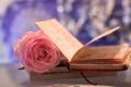 Картинка цветок, макро, розовая, роза, книжка