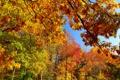 Картинка осень, лес, небо, листья, деревья, ветки