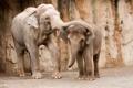 Картинка beautiful, elephant, Group
