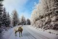 Картинка зима, дорога, лес, снег, деревья, фотошоп, олень