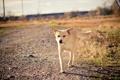 Картинка дорога, друг, собака