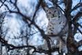 Картинка ветки, дерево, рысь