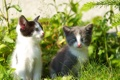 Картинка котята, grass, травка, веточки, kittens, twigs