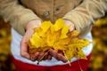 Картинка осень, листья, руки
