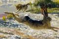 Картинка погоня, охота, Bob Kuhn, заяц, волк, арт, хищник
