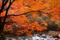 Картинка листья, лес, осень, река, ручей, камни, дерево