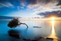 Картинка море, небо, дерево, закат солнца