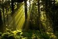 Картинка лес, трава, солнце, лучи, свет, деревья, ветки