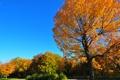 Картинка осень, небо, трава, листья, дерево