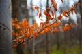 Картинка листья, лес, ствол, осень, дерево