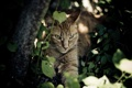 Картинка кот, морда, заросли, тень, отдых, кошка