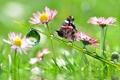 Картинка капли, цветы, бабочка, стебель