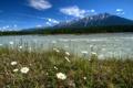 Картинка пейзаж, Kootenay, ромашки, природа, горы, Vermilion, парк