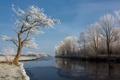 Картинка зима, природа, река, дерево