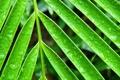 Картинка вода, капли, лист, роса, растение, ветка