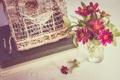 Картинка клетка, лепестки, цветы