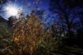 Картинка дом, деревья, синее небо, тени, солнце