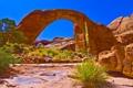 Картинка трава, природа, камни, скалы, Arizona, The Grand Canyon, Green & Orange