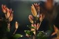 Картинка листья, капли, свет, природа