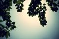 Картинка листья, деревья, ветки, природа, фото, ветви, обои