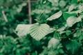 Картинка листья, дерево, ветка, насекомое, зеленое