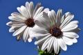 Картинка небо, цветы, природа, растение, лепестки