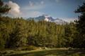 Картинка лес, деревья, горы, поляна, Колорадо, Colorado, Rocky Mountain National Park