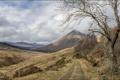 Картинка природа, пейзаж, дорога, дерево