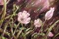 Картинка трава, капли, линии, цветы, дождь, лепестки