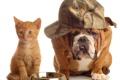 Картинка котенок, собака, бульдог, кепка, миска