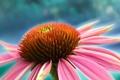 Картинка цветок, рисунок, лепестки, ярко
