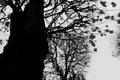 Картинка осень, листья, ветки, дерево, холодно