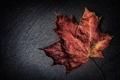 Картинка осень, макро, красный, лист, цвет