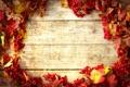 Картинка осень, листья, autumn, leaves, веточки калины, twigs of viburnum