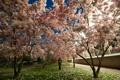 Картинка деревья, город, парк