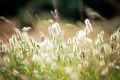 Картинка поле, лето, природа, травы