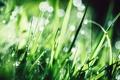 Картинка трава, капли, фотограф, photography, photographer, Björn Wunderlich