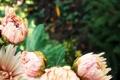 Картинка капли, цветы, розовый, лепестки